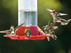 Hummingbird Nectar Recipe 187 Mansfield Feed Mill