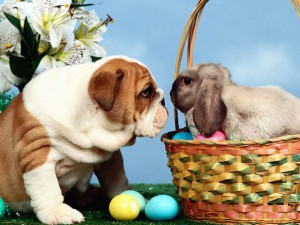 Easter-Staring-Contest-1