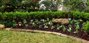 LandscapingTexas