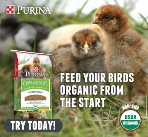 purina organic chicken feed