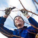 January Garden Tips - prune your trees