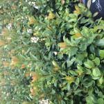 January Garden Tips