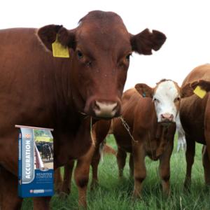 Cattle Starter Feed