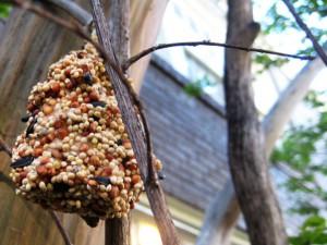 peanut butter pinecone