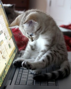kitty on computer