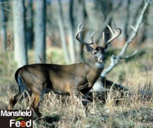 Supplemental Deer Feeding Program