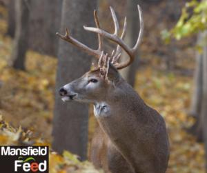 Hunting Season Preparation