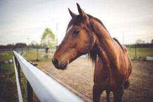 Basics of Electrolytes for Horses